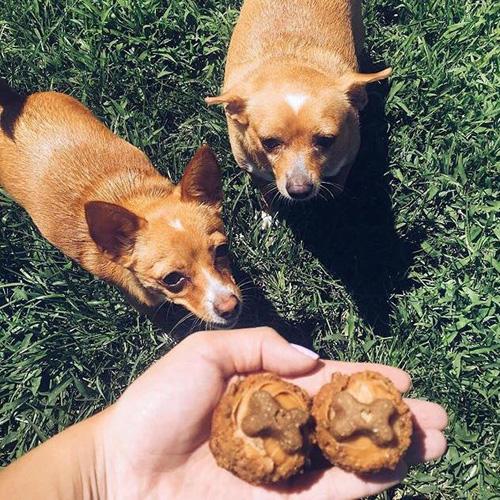 Doggie Delight - Mini Image