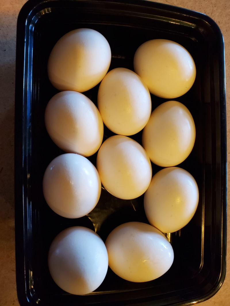 USDA Grade AA Medium 10 eggs Image
