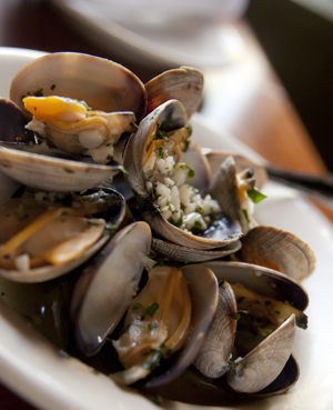 Clams Image