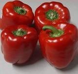 Bell RED Pepper 1 Each