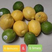 Lemon & Lime Dozen