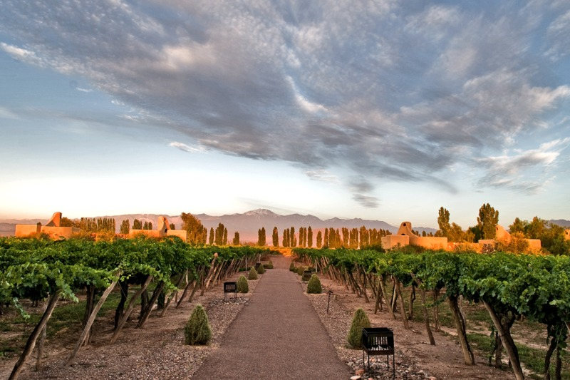 Early Bird Ticket: South American Wines   Wed May 19th 5pm - 7pm Image
