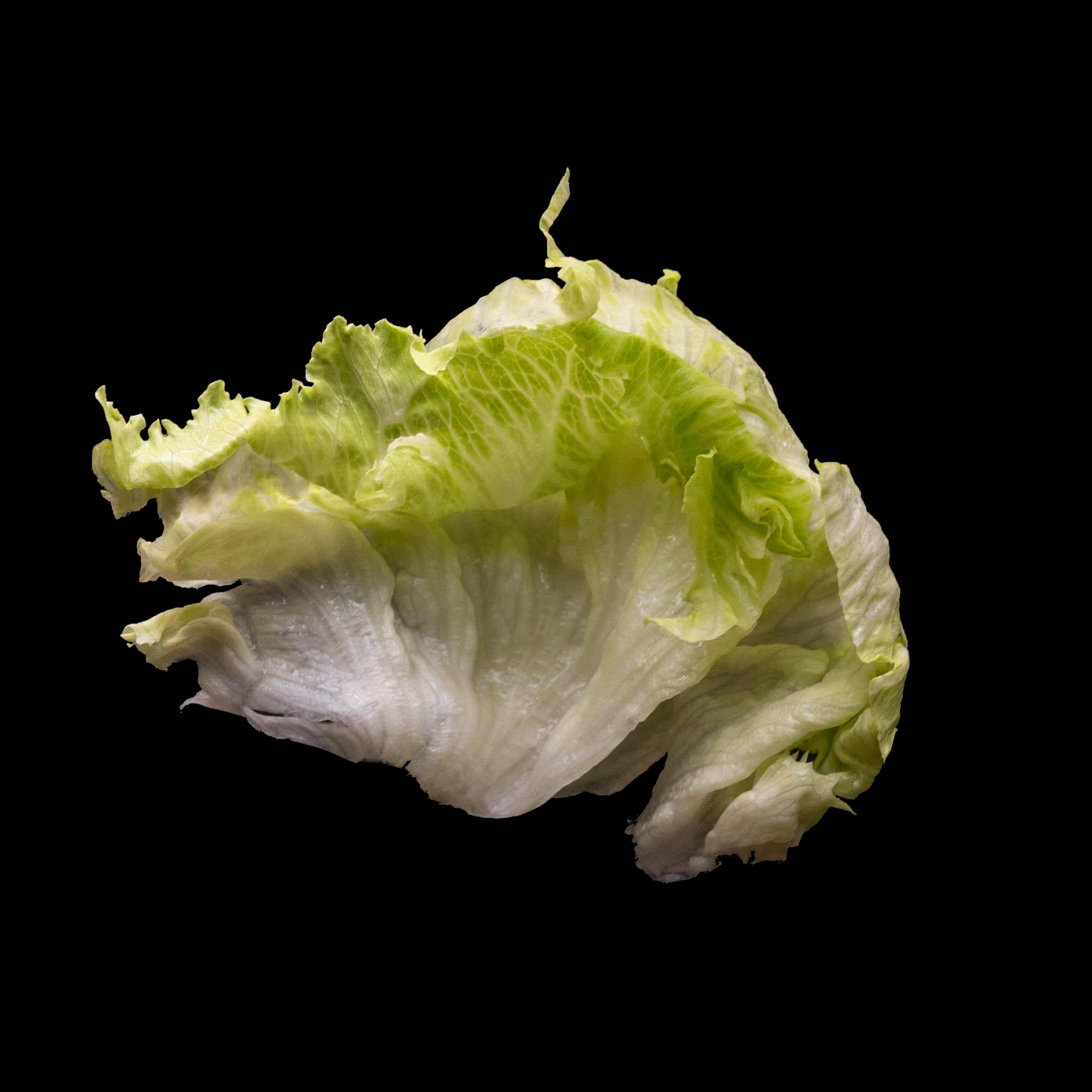 56. 生菜 Lettuce