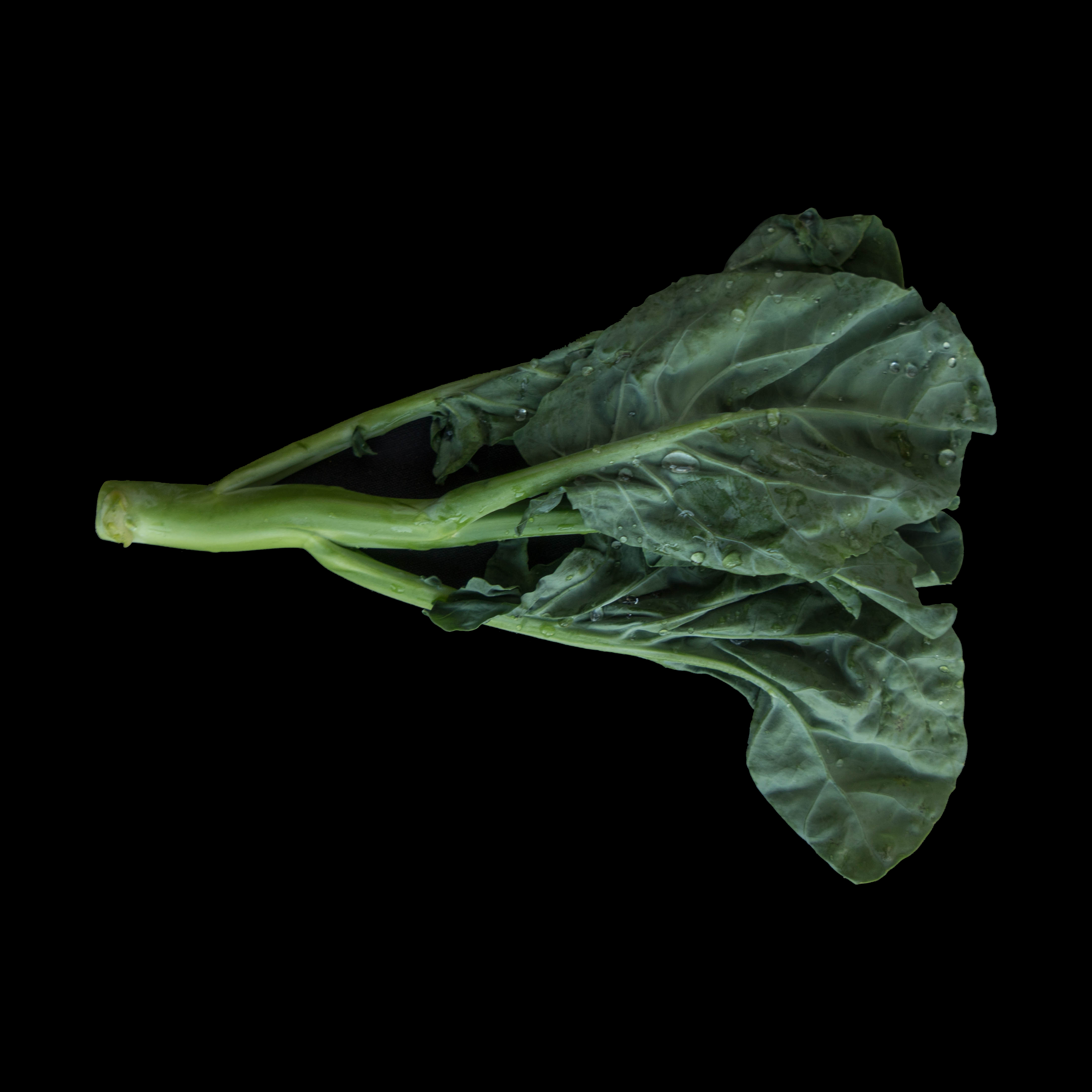 59. 芥蓝 Chinese Broccoli Image