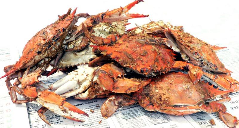 Steamed Hard Crabs #1 Image