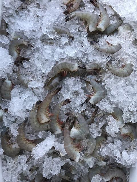 Fresh Large Raw Shrimp Image